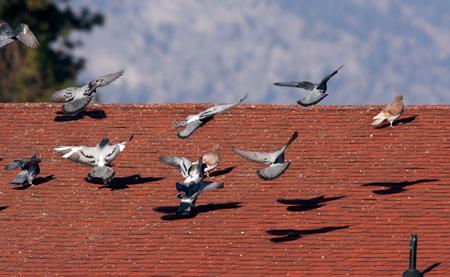 Bird Control for open spaces