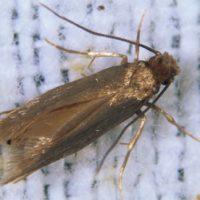 Managing Clothes Moths